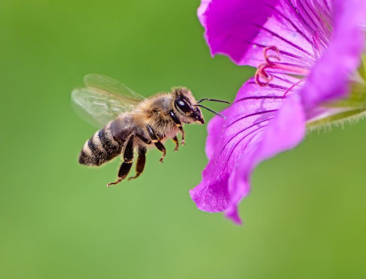 Tips for starting a beekeeping project