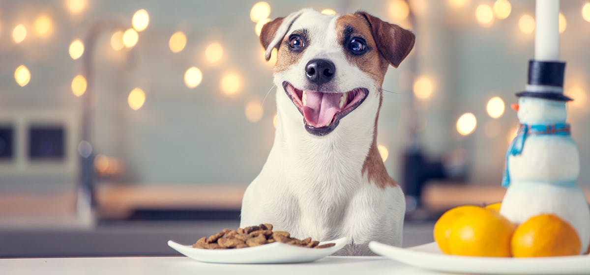 Some Good Tips to Buy Dog Products Online